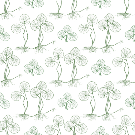 Gotu kola. Background, wallpaper, seamless. Sketch. Monochrome. Leaves, stem, root.