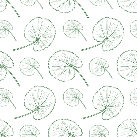 Gotu kola. Leaves. Background, wallpaper, seamless. Sketch. Monochrome.