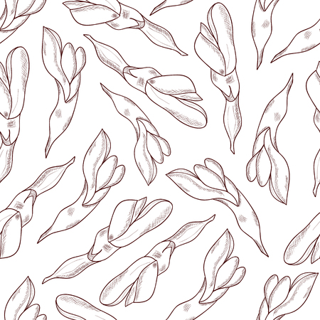 Licorice. Flower. monophonic. On a white background. Sketch. Background, wallpaper, seamless.