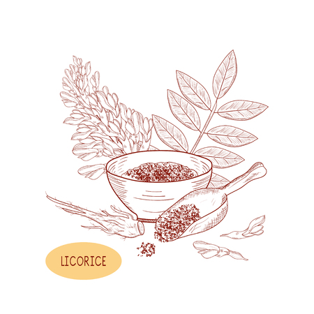 Licorice. Root, flower, leaves. On a white background. Sketch. Monochrome. Stock Photo