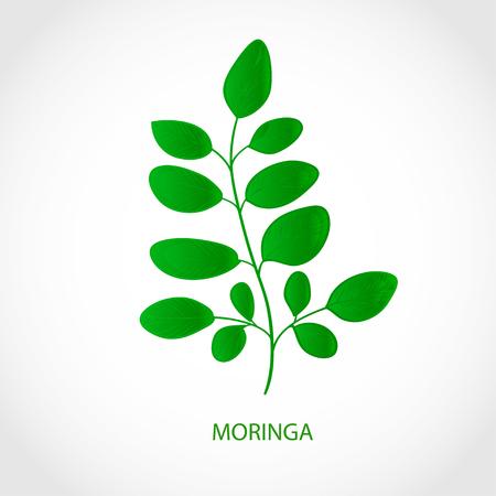 Moringa. Plant. Logo, emblem, symbol, symbol. Foto de archivo - 102423579