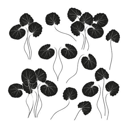 Gotu Kola. Leaves, stem. Monochrome. Black silhouette on white background. Set Illustration