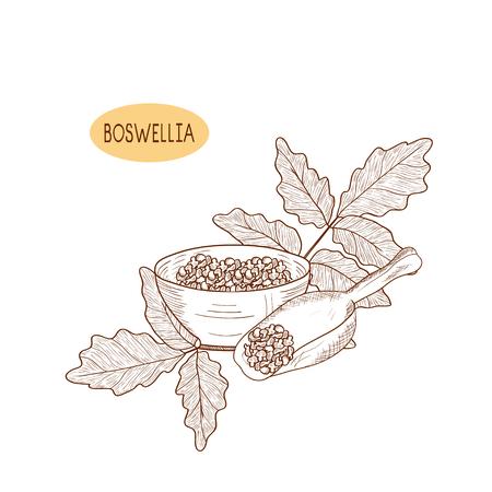 Boswellia. Plant. Bowl, scoop. Monochrome. Sketch.