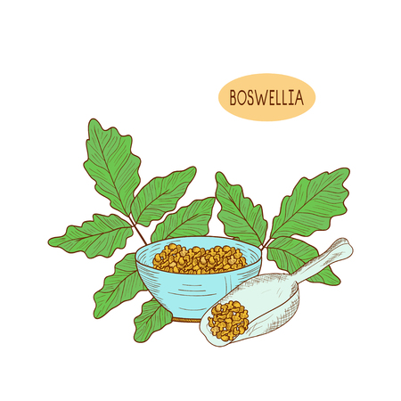Boswellia. Plant. Branch, leaves.  Sketch. Set. On a white background.