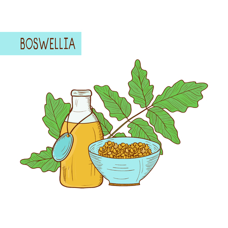 Boswellia. Plant. Branch, leaves. Bowl and bottle. Incense. Sketch. Set. On a white background.