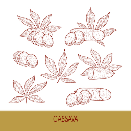 Cassava. Tuber leaves. Sketch. On a white background. Set.