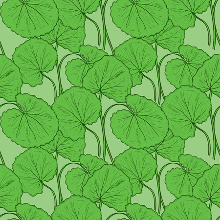 Gotu kola. Leaves. Sketch. Background, wallpaper, texture, seamless. Иллюстрация