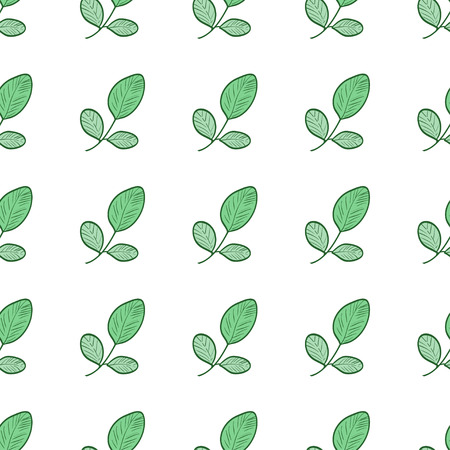 Moringa. Background, wallpaper, texture, seamless. Sketch.