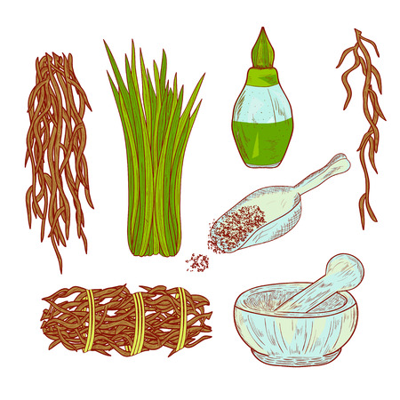 Vetiver. Plant. Leaves and root. Scoop, mortar, perfume. Set. The color pattern. Sketch. Illustration