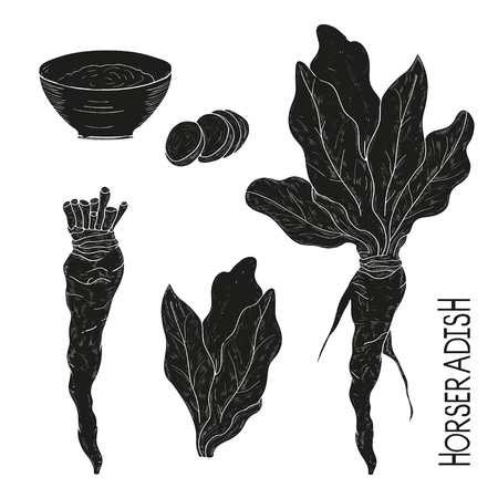 Horseradish. Plant. Leaves, root, hunk. Black silhouette on white background. Set