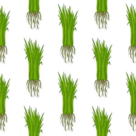 Vetiver. Plant. Leaves, root. Background, wallpaper, seamless. Sketch. Color. Vector Illustration