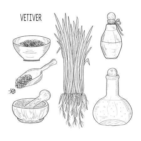Vetiver. The plant. Leaves, root. Scoop, mortar, bowl, vial. Set. Monochrome. Sketch.