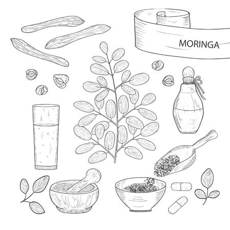 Moringa. Plant. mortar, glass, tablet, powder, bottle, grain. Set. Sketch.