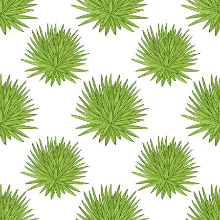 Yucca. A plant, a bush. On a white background. Sketch. Wallpaper, texture, seamless.