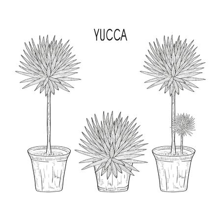 Yucca. Plant in the pot. Set. Sketch. Monochrome
