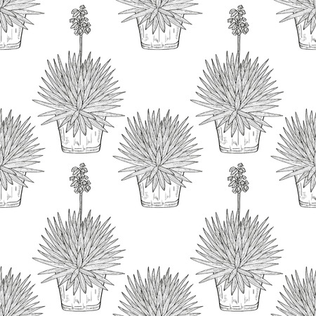 Yucca.Flowering plant. A flower pot. Sketch. Wallpaper, texture, seamless. Monochrome