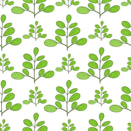 Moringa. Branch. Background, wallpaper, texture, seamless. Sketch. Illustration