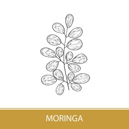 Moringa. Plant. Logo, emblem, symbol, symbol. Monochrome. On a white background. Foto de archivo - 112218435