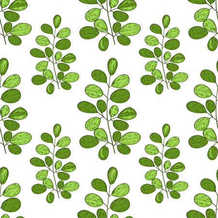 Moringa. Branch. Background, wallpaper, texture, seamless. Sketch. On a white background green branches, leaves.