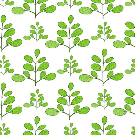 Moringa. Branch. Background, wallpaper, texture, seamless. Sketch. Stock Photo