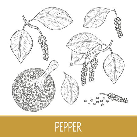 Pepper. A plant, a fruit, a bowl, a spoon. Sketch. Monochrome. Set. Illustration