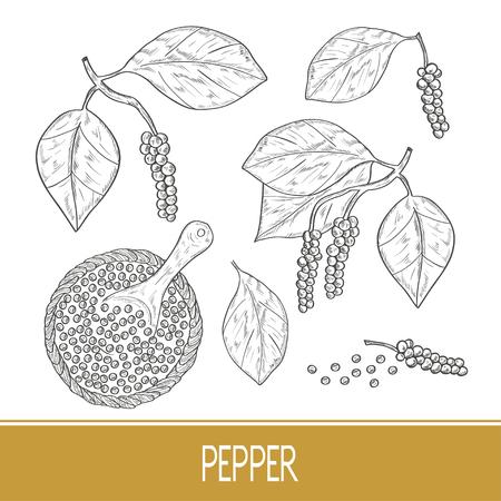 Pfeffer. Eine Pflanze, eine Frucht, eine Schüssel, ein Löffel. Skizzieren. Einfarbig. Einstellen.