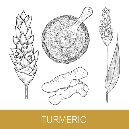 Turmeric. Set. Flower, leaf, root, powder. Sketch. Standard-Bild - 112000114