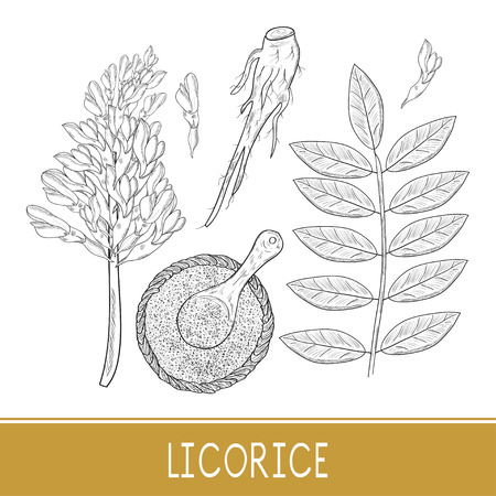 Licorice. Root, flower, leaves, basket, spoon, powder. On a white background. Sketch. Monochrome. Set