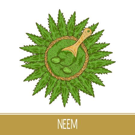 Neem. Plant. Leaves, fruit, powder, spoon. Sketch. Color pattern.
