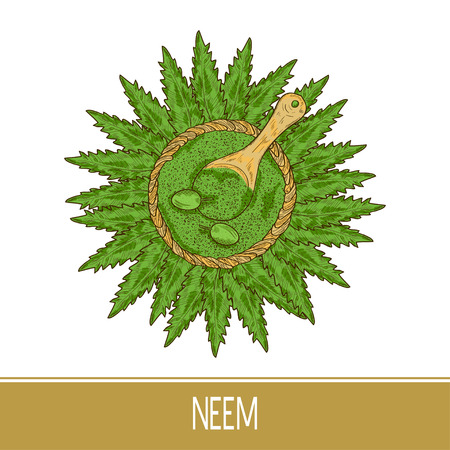 Neem. Plant. Leaves, fruit, powder, spoon. Sketch. Color pattern.