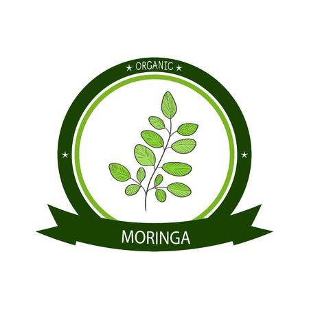 Moringa. Plant.  emblem, symbol, symbol, sticker. Illustration