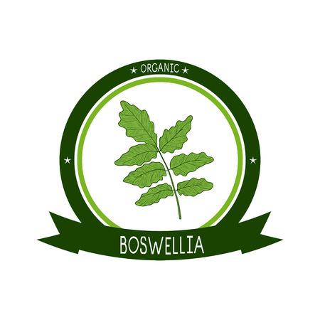Boswellia. Plant. Branch, leaves. Sketch. sticker, emblem