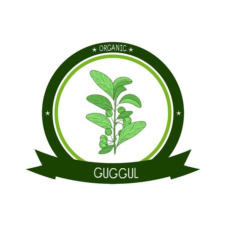 Guggul. Plant. Branch, leaves, fruit. Sketch. Color. On a white background. sticker, emblem