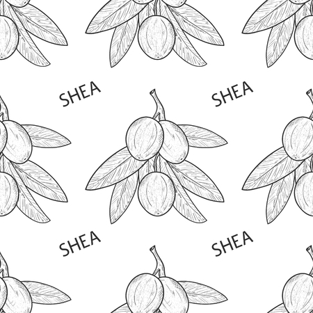 Shea. Branch, leaves, fruit. Sketch. Wallpaper, seamless, texture. Monochrome.