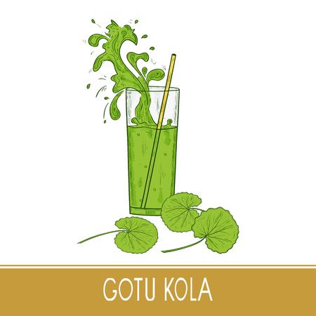 Gotu kola. Leaves. A glass, straw. Splash. Sketch. Illustration