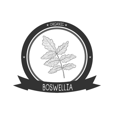 Boswellia. Plant. Branch, leaves. Sketch. Logo, sticker, emblem. Monophonic Illustration