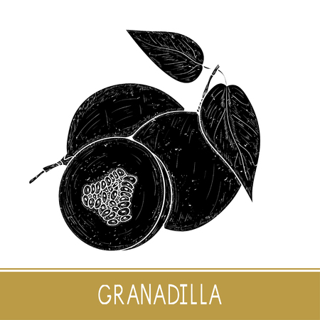 Granadilla. Fruit, leaves. Black silhouette on white background. Illustration