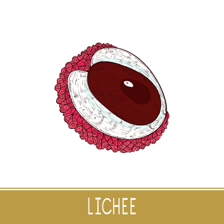 Lichee. Fruit.  Sketch. Color