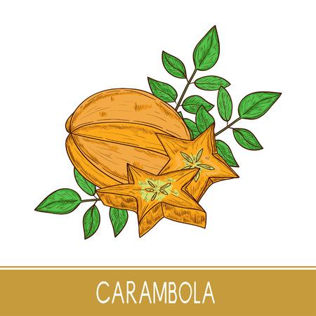 Carambola. Delicacy. Tropical Fruit. Sketch. Standard-Bild