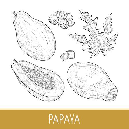 Papaya. Tropical Fruit. Fruit, slice, leaf. Monochrome. Sketch. Set