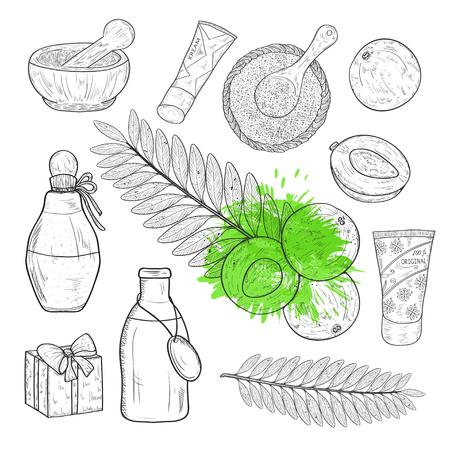 Amla. Pflanze. Obst, Blatt. Flasche, Mörser, Geschenk, Sahne, Löffel, Pulver. Skizzieren. Einstellen.