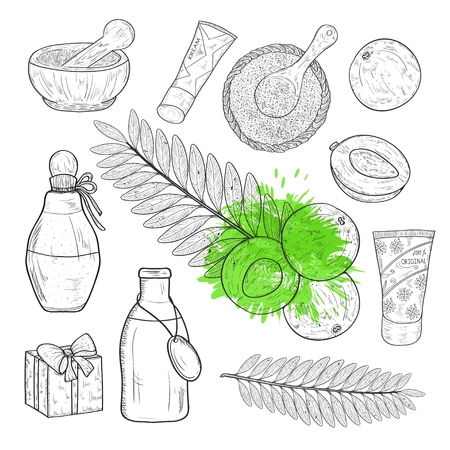 Amla. Plant. Fruit, leaf. Bottle, mortar, gift, cream, spoon, powder. Sketch. Set.