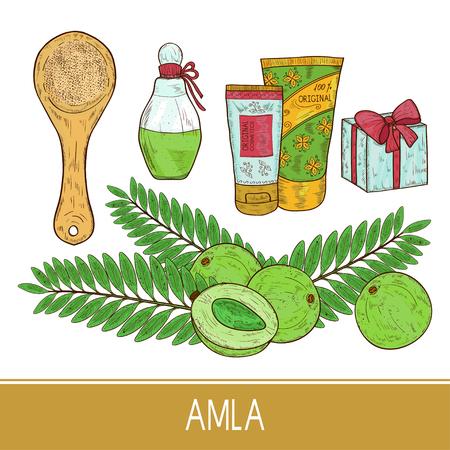 Amla. Pflanze. Obst, Blatt. Flasche, Geschenk, Sahne, Löffel, Pulver. Skizzieren. Einstellen. Farbe Vektorgrafik