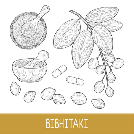 Bibhitaki. Terminalia bellirica. Plant. Leaf, branch, fruit, berry. Powder, mortar, tablet. Set. Sketch. Monochrome.