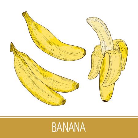 Banana, sketch. Exotic fruit. Set. Color