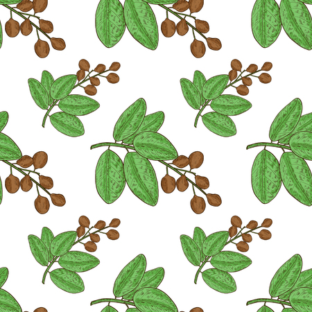 Bibhitaki. Terminalia bellirica. Plant. Leaf, branch, fruit, berry. Seamless, wallpaper, background. Sketch. Color