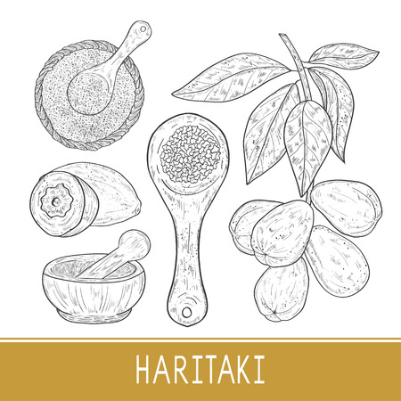 Haritaki. Terminalia chebula. Plant, mortar, powder, spoon. Fruit, leaves, branch. Set.