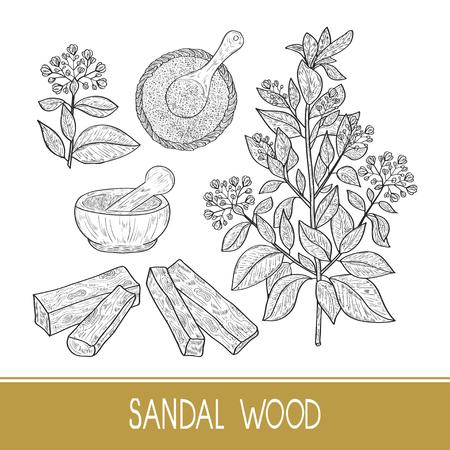 Sandal wood. Plant. A stem, leaf, flower. Powder, mortar, spoon. Monochrome. Sketch. Set Illustration