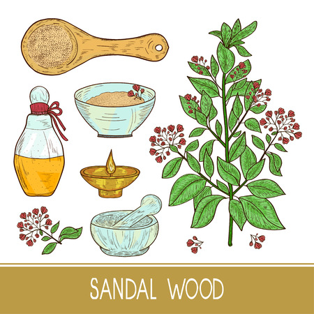 Sandal wood. Plant. A stem, leaf, flower. Powder, spoon, oil, bottle, mortar. Color. Sketch.