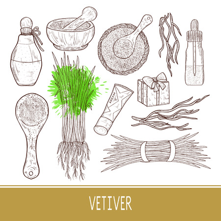 Vetiver. The plant. Leaves, root. Mortar, spoon, powder, bottle. Set. Monochrome. Sketch.